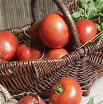 Comment restaurer le goût de nos tomates ?