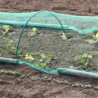 Protégez votre jardin potager des ravageurs et nuisibles
