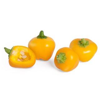 Mini poivron jaune recharge Lingot pour potager Véritable